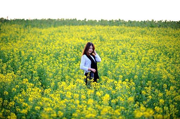 Lưu ngay địa chỉ check in hoa cải vàng đẹp nhất Hà Nội