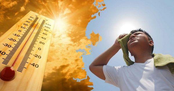 Trà sâm Ngọc Linh - Thức uống thanh nhiệt, tăng sức đề kháng không thể thiếu trong mùa hè