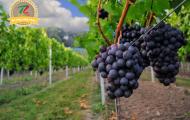 Vin de bordeaux Ulysse Bordeaux - sự kết hợp hoàn hảo của tinh túy từ nước Pháp