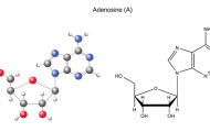 Vai trò của Adenosine đối với sức khỏe tim mạch