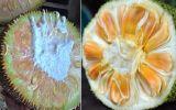 Cứ nhìn vào điểm này là biết ngay trái cây chín tự nhiên do hoá chất