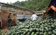 Nhiều mặt hàng xuất khẩu sang Trung Quốc gặp khó